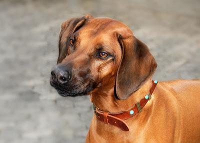 buerohund-bei-humanitas.jpg
